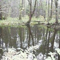 Затерялось зеркальце в лесу :: Николай Масляев