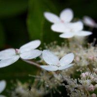 Бабочки :: Юрий Кольцов