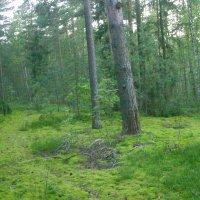 В окрестностях урочища Большое болото :: Виктор Мухин