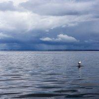 Одинокая чайка :: Сергей Добрыднев