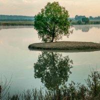 Отражение :: ирина лузгина