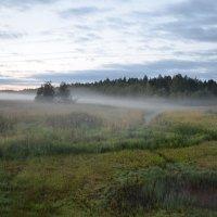 Седое туманное утро :: demyanikita