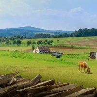 пейзаж с лошадками. :: Ирина ...............