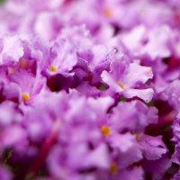 Цветы :: Erizo Espinoso