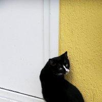 Черная кошка, белый носик :: Татьяна Кейси Зубкова