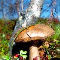По грибы по ягоды.... :: Анна Приходько