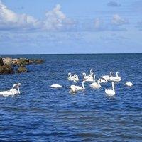 Лебеди на море :: Маргарита Батырева