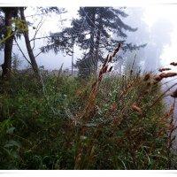 Утренний туман :: Любовь Чунарёва