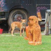 Две собаки :: Natalia Harries