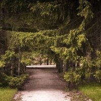 ботанический сад, Новосибирский Академгородок, май 2013 г. :: Екатерина Липинская