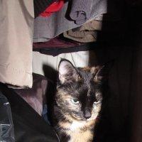 Мила в шкафу :: Валерий A.
