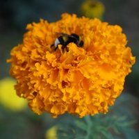 на цветке :: Alexandr Staroverov