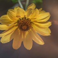 Вдыхая солнца аромат :: Лидия Цапко