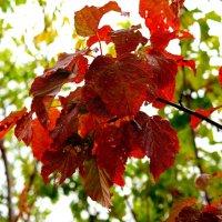 Багрянец осень щедро плещет.. :: Андрей Заломленков