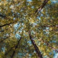 Прогулка в лесопарке 4 :: Сергей Филатов