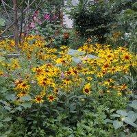 Цветы во дворе :: Олег Афанасьевич Сергеев