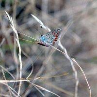 Маленькая бабочка :: Ольга Анх