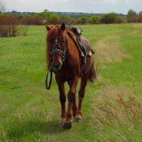 Лошадь. :: nadyasilyuk Вознюк