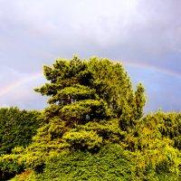 Rainbow :: Sergey Sergaj