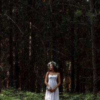 В мистическом лесу :: Наталья Колокольцова