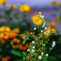 Утренние цветы :: Юрий Гайворонский