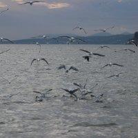 Чайки :: Дмитрий Солоненко