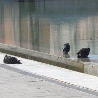 А завтра осень... купания запретят! :: Александр Скамо