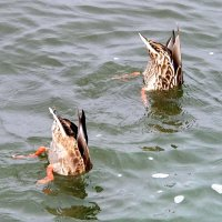 Тили-тили-тили-дон!   Упал в воду телефон! :: Наталья