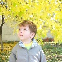 Золотая осень :: Светлана Казмина