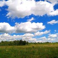 Облака, облака, белогривые лошадки.. :: Андрей Заломленков