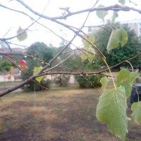 Осень-осень... :: Serg