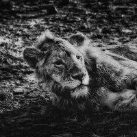 Солнце,жара,саванна...Танзания! :: Александр Вивчарик