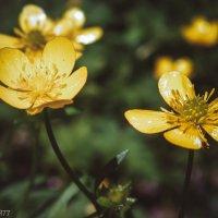 Цветы :: Виктор