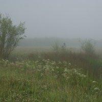 утро туманное, утро седое :: Надежда Мельникова