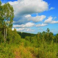 Забытая дорога :: Владимир Куликов