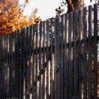 Осень рыжей кошкой  ходит по садам, нюхает дорожки, ищет по следам… :: Елена Дорогина