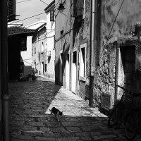 кот, который... :: Лара Leila