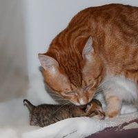 Рыжик и Тигрёнок :: Сергей Бойко