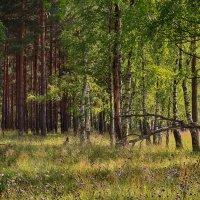 в лесу :: Сергей Бойцов