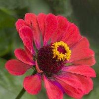 Аленький цветок :: Дубовцев Евгений
