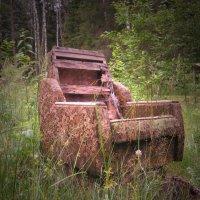 Лесной трон :: Павел Зюзин
