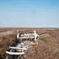 Стоянка древних инуитов :: Alexander Dementev