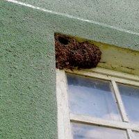 Гнездо ласточек :: Татьяна Королёва