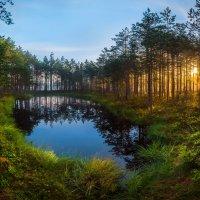 Лесное озеро на рассвете :: Фёдор. Лашков