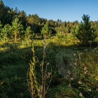Утром в лесу :: Андрей Поляков