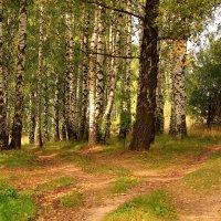 Ранняя осень, неслышно ступая, золотом красит уж косы берез :: Татьяна Ломтева