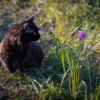 цветок :: Станислав Пономарчук