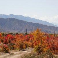 Южное побережье Иссык-Куля, горы Терскей Ала-Тоо, сентябрь :: GalLinna Ерошенко