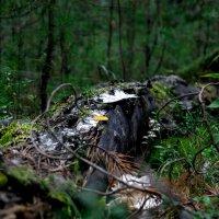 Старое дерево. :: Elena Nikitina