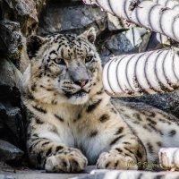 Новосибирск Зоопарк им. Р. А. Шыло. :: Дмитрий Багмет